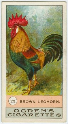 Brown leghorn, Ogden's Cigarettes, cigarette card, rooster