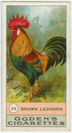 Brown leghorn, Ogden's Cigarettes, cigarette card, rooster