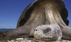 Parque Nacional de las Islas Galápagos, Ecuador Este parque abarca el 97% de lo que son las Islas Galápagos. Tiene una diversidad natural increíble, aunque los animales más famosos son las tortugas, iguanas y el albatros. Son 13 islas grandes, 5 medianas y 215 islotes los que forman este archipiélago en pleno Pacífico. Charles Darwin descubrió aquí su famosa teoría de la evolución de las especies, lo que le ha llevado a adquirir el sobrenombre de las Islas Encantadas.