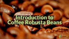 Introduction to Coffee Robusta Beans Coffee Maker Reviews, Coffee Beans, Beef, Vegetables, Breakfast, Videos, Amazing, Food, Meat