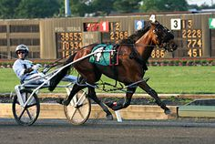 harness racing | alg_harness_racing.jpg