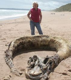 Washed up: Margaret Flippence, 55, was walking on the Scottish beach with her husband Nick when she found this unknown creature's skeleton