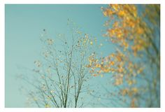 Nature Photography  Autumn Tree   Fine Art by AliciaBock on Etsy (Art & Collectibles, Photography, Color, fpoe, fine art, nature photography, nature photograph, alicia bock, autumn, fall, autumn art, season, landscape photograph, autumn decor, fall art, blue sky)