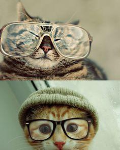 Nerd Cats!