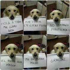 si, esta bien perrito :,3