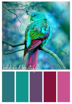** check out her board - lots of different bold and beautiful color combos