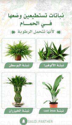 House Plants Decor, Plant Decor, Veg Garden, Garden Plants, Flowers Last Longer, Baby Shower Deco, Best Indoor Plants, Pinterest Room Decor, Growing Plants