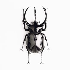 dream 3 horned rhinoceros beetle was inspiration for an unusual sports car whose horns retracted over the headlights when the car started These beetles can lift objects Rhino Beetle, Beetle Insect, Black Beetle, Beetle Tattoo, Scarab Tattoo, Beautiful Bugs, Insect Art, Bugs And Insects, Rhinoceros