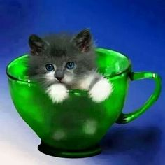 Kitty in a cup♡