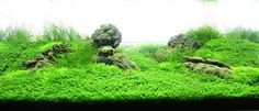 "Layout 72 - Eduard Gercog - Tropica Aquarium Plants ""medium"" difficulty"