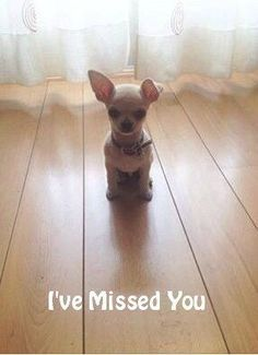This lonely Chihuahua cutie not only missed you, but is waiting patiently for you to pick for it a cute Chihuahua dog name... http://www.dog-names-and-more.com/Chihuahua-Names.html