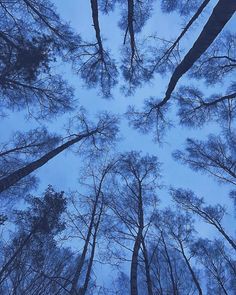 Alabash Elena в Instagram: «Выше облаков.. Хм, сколько же они в высоту 🌱 Лично мне, на фотографии очертания крон деревьев напоминают некое своеобразное лицо 🤔 и…»