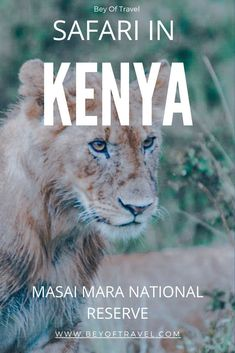 The Masai Mara is a safari experience like no other and provides one the best opportunities to spot all of the big five on safari! This guide will show you how to plan your Kenya budget safari. #safari #kenya #bigfive