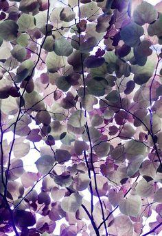 purple in nature...