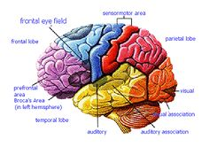 This Fatty Acid Can Help Protect Your Brain From Alzheimer's Speech Pathology, Speech Language Therapy, Speech And Language, Music Therapy, Play Therapy, Physical Therapy, Speech Therapy, Brain Based Learning, Whole Brain Teaching