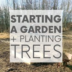 Always dreamed of starting a garden? Me too! Which is why it was the first project we tackled after moving into our sustainable home. Check it out! #startingagarden #plantingtrees #sustainableliving Sustainable Design, Sustainable Living, Building Raised Beds, Starting A Garden, In The Tree, Planting Seeds, Permaculture, Garden Beds, Check It Out
