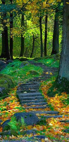 Forest Path, Ukraine - I love pathways Foto Nature, All Nature, Forest Path, Forest Scenery, Walk In The Woods, Stairway To Heaven, Jolie Photo, Pathways, Beautiful Landscapes