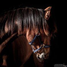 Horses, Animals, Photoshoot, Pictures, Animaux, Animales, Horse, Animal, Dieren