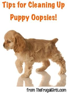 Tips for Cleaning Up Puppy Oopsies! ~ from TheFrugalGirls.com ~ tried and true tricks for getting dog stains out of carpets + more! #pets #puppies #thefrugalgirls