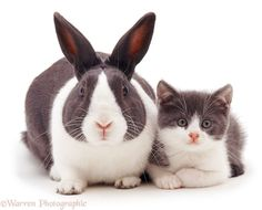 Warren Photographic, a UK-based image library specializes in pet photography but, what actually makes it different is that it matches pet animals like a white cat with a white bunny and makes the pose cutely and then captures their picture.