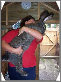 I so badly want a giant rabbit!