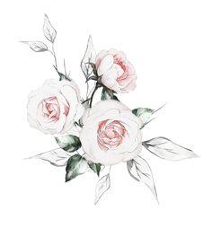 Water Drawing, Watercolor Drawing, Watercolor Flowers, Watercolor Paintings, Botanical Flowers, Botanical Prints, Flower Frame, Flower Art, 1 Clipart