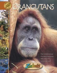 Orangutans - Zoobooks at theBIGzoo.com, a family-owned gift shop with 12,000+ animal-themed items.