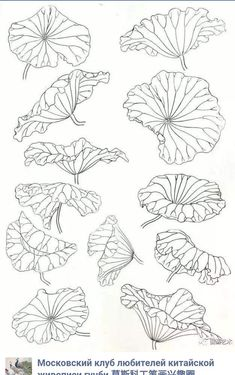 Lotus Painting, China Painting, Fabric Painting, Lotus Flower Art, Lotus Art, Lotus Flower Drawings, Lotus Drawing, Botanical Drawings, Botanical Illustration