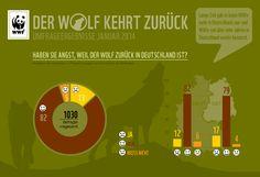 Unsere Umfrage zeigt: 82 Prozent der Befragten haben keinerlei Ängste in Bezug auf die Rückkehr des Wolfs. Und ihr?