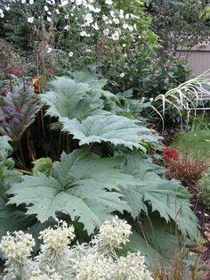 Gunnera - link to Innovative Garden Design inspired by nature Bog Garden, Gravel Garden, Shade Garden, Dream Garden, Garden Art, Garden Plants, Garden Design, Garden Ideas, Dinosaur Plant