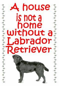 Labrador Retriever Fridge magnet various door MagnetsAndHangers