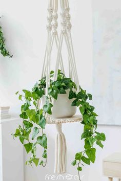 Want gorgeous home decor ideas this holiday season? Check out how to hang plants in apartments to make them pretty and so much more liveable! Indoor Gardening, Indoor Plants, Lipstick Plant, Natural Air Purifier, Cactus Care, Decor Ideas, Gift Ideas, Hanging Planters, Small Apartments