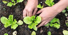 Orto: cosa coltivare ad agosto