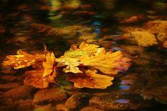 Autumn. by Dai333, via Flickr