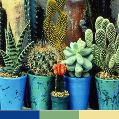 Just nice mix of blue - yellow - green & touch of orange & some beige