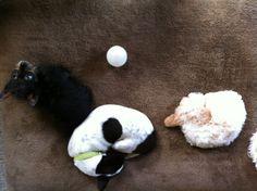 Adorable puppy Falcor!!