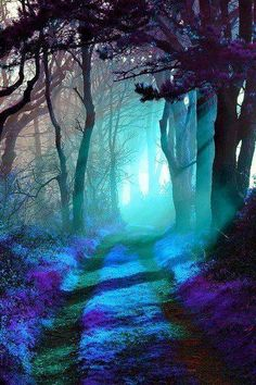 Magical forest purple path