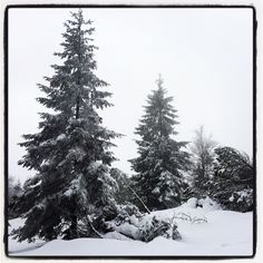 Schneeschuhwanderung rund um den Ruhestein.