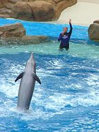 Become a Dolphin Trainer - wikiHow