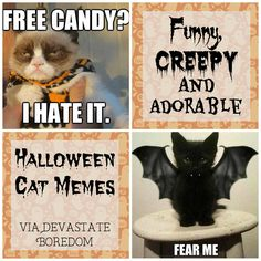 Marvelous Funny Halloween Cats for a Laugh FridayFrivolity