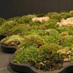 Badmat van mos (om zelf te maken)
