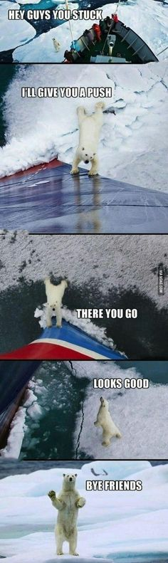 Good guy polar bear - 9GAG