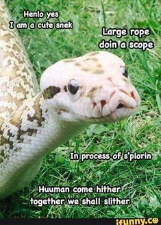 Yes I know snek memes are dead but I don't care Cute Funny Animals, Funny Animal Pictures, Cute Baby Animals, Funny Cute, Animals And Pets, Jungle Animals, Hilarious, Le Husky, Cute Reptiles