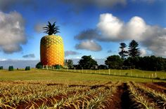 Six Totally Unique Places to Visit in Africa: The Big Pineapple Bathurst, Eastern Cape, South Africa If you've ever wondered where you can find the world's largest artificial pineapple, your curious. Big Pineapple, Walkabout, Places Of Interest, Travel And Tourism, The Locals, South Africa, Places To Visit, Explore, World