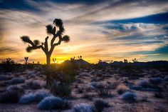 Happy Thanksgiving! Here at Interior, we're thankful all year long for America's amazing public lands like Joshua Tree National Park in California. Pictured here is one of the park's iconic Joshua Trees illuminated at sunset.