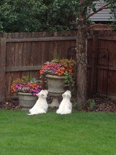 Squirrel Stalkers