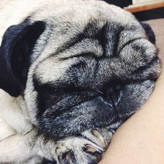 Squishy face.