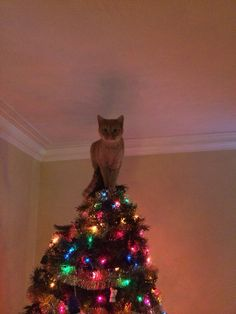 dickcat:  Merry Catsmas! Via reddit