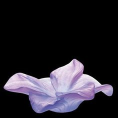 Daum Crystal Amaryllis Violet Flower 02582-2 at Biggs Ltd. Gallery. $280.