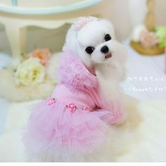 Melaleuca hooded pet dog  puppy tutus dress clothes apparel spring and summer 2015 New Hot dog clothing girl clothes princess